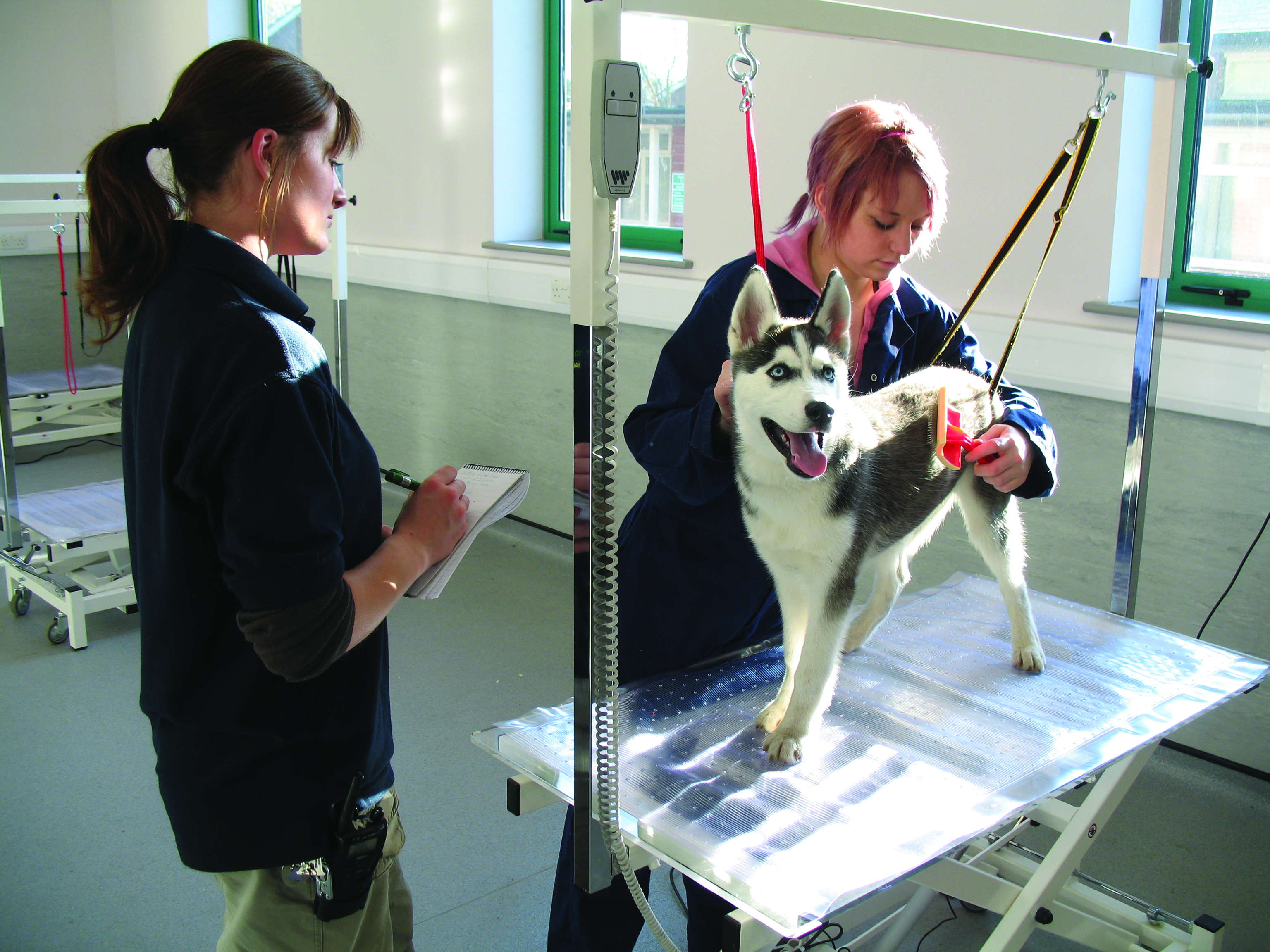 Dog Grooming Leaflet Reaseheath College