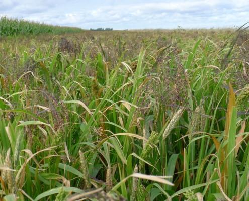 crops seeds