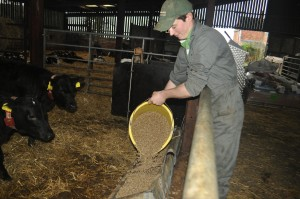 Larry Anscombe tops up calf pellets