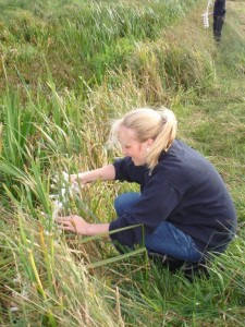 Flashback: Lauren Lane releases the fen raft spiderlings into a protected habitat