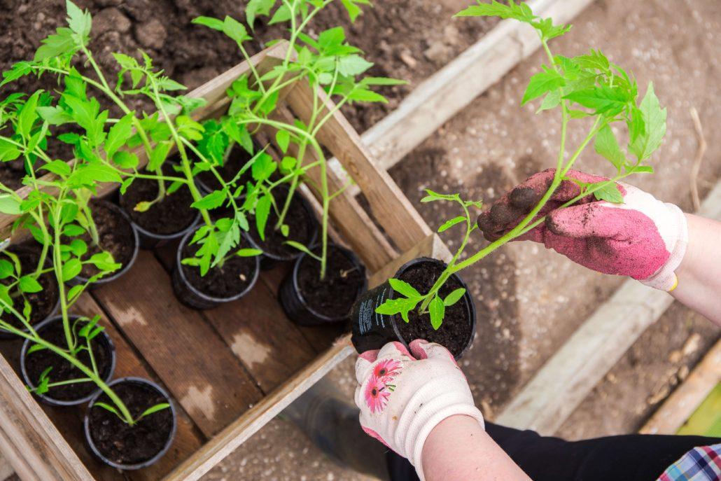 Garden Design and Plants - Reaseheath College