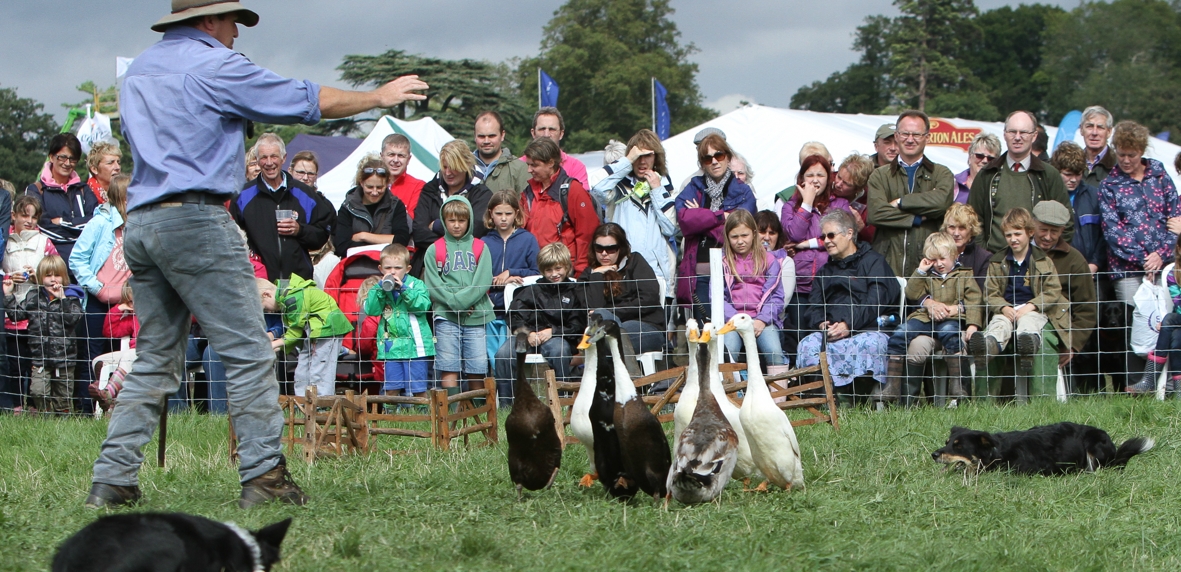 Cheshire Dog Show  Results