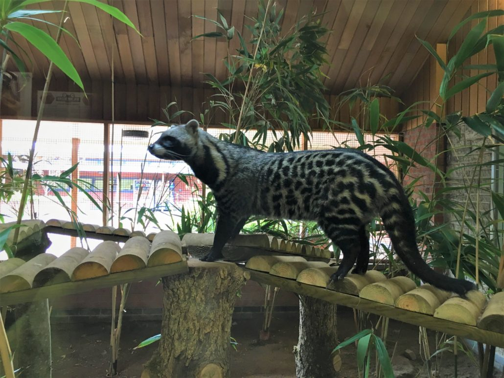 Reaseheath's Mini Zoo – 20th July – 1st September, 10am ...